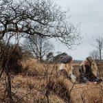 National Park 'Drents Friese Wold'