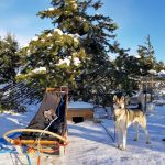 Husky & Yoga Nature Lapland
