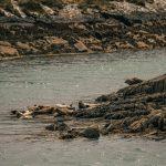 Ierland Kayaking Seals