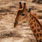 Sanbona Wildlife Reserve