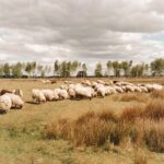 Uniek Slapen Keetje Drenthe Tralaluna