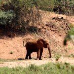 Return Africa Pafuri Camp