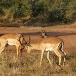 Casart Game Lodge near Krugerpark